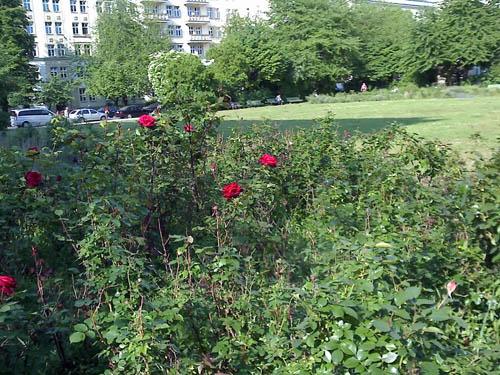 rosengarten-berlin © lele