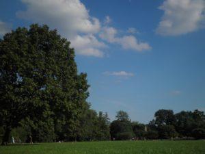 Treptower Park Wiese