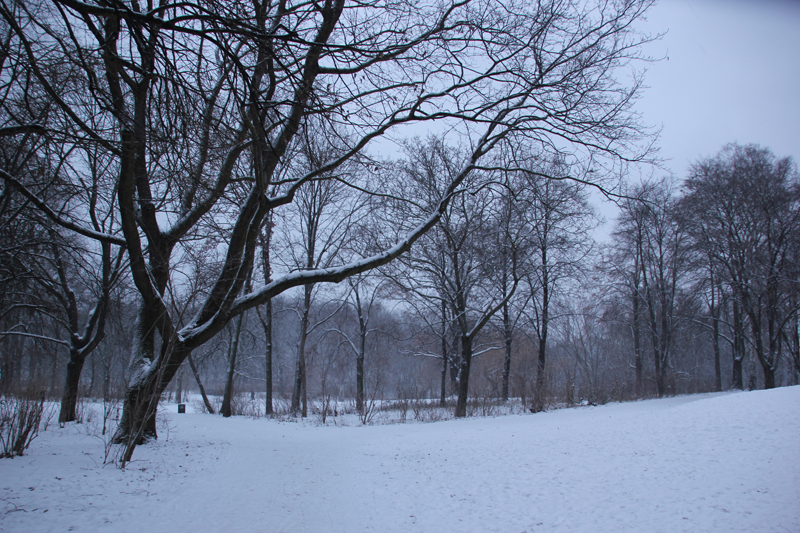 Wiese Volkspark Friedrichshain