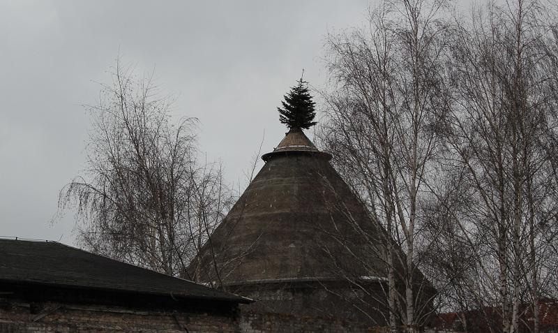 Baum auf Dach Friedrichshain
