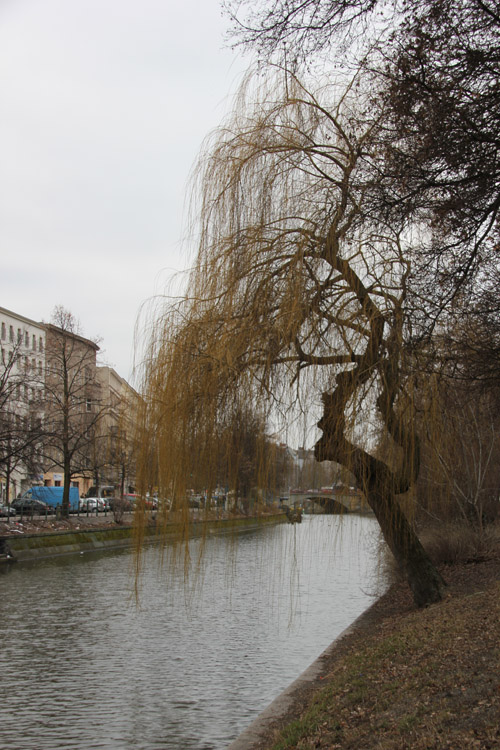 Baum Paul-Linke-Ufer