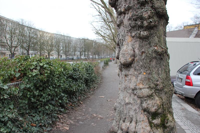 Fränkelufer Bäume
