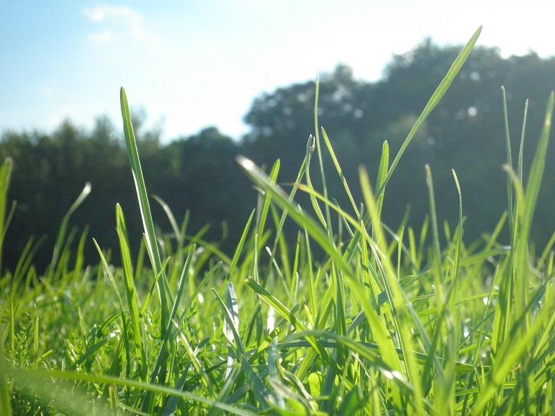 Rasen im Park