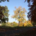 01 Herbst Viktoriapark Kreuzberg