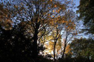 03 Herbstlaub Viktoriapark Kreuzberg