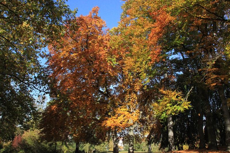 07 Herbstbäume Kreuzberg
