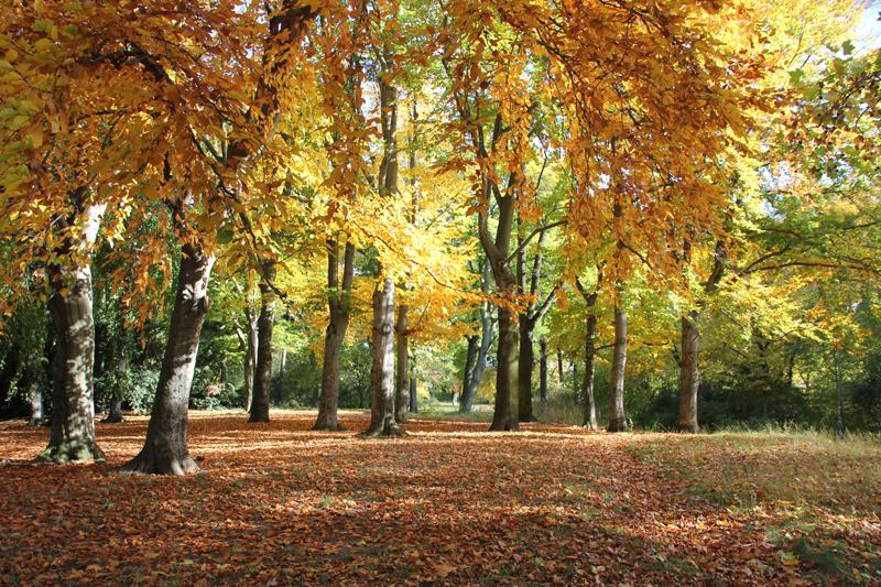 08 Birken Viktoriapark Kreuzberg