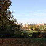12 Liegewiesen Viktoriapark