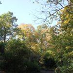 13 Wege durch Viktoriapark
