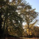 17 Wäldchen Viktoriapark