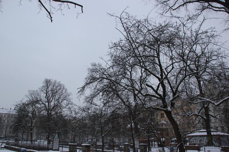 Bäume Boxhagener Platz