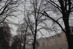 Bäume entlang KMA Friedrichshain