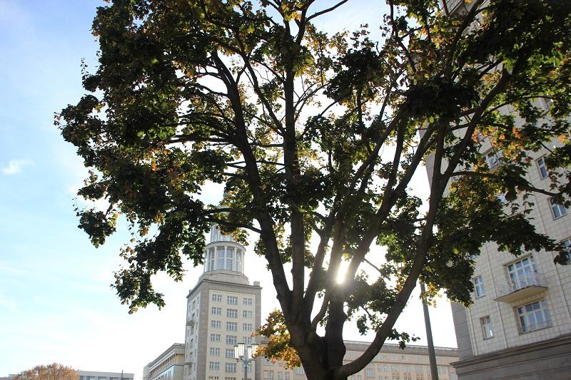 Baum Blick auf Südturm Frankfurter Tor