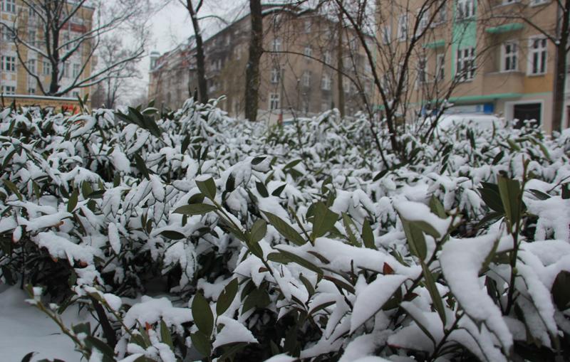 Pflanzen im Schnee Friedrichshain