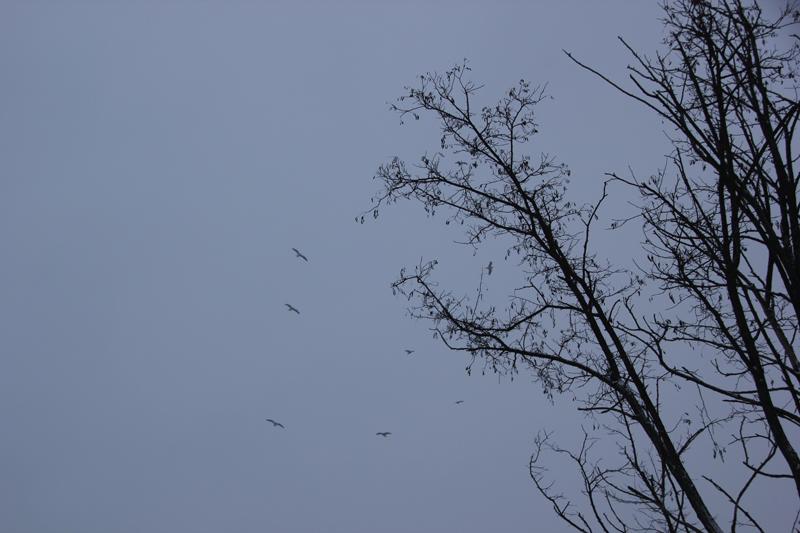 Vögel im Himmel über Friedrichshain