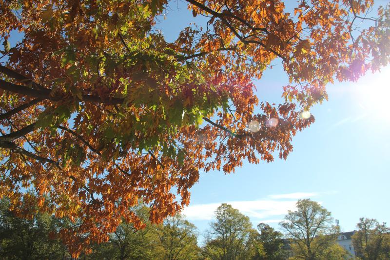 Herbst Baum Forkenbeck Platz