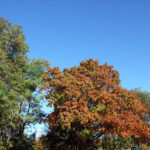 Herbst Forkenbeck Platz