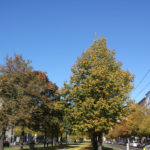 Petersburger Herbst