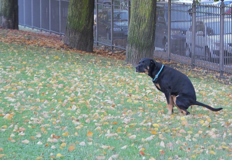Hundekot im Park