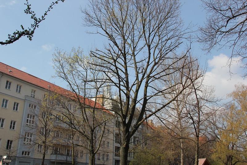 Fruehling in Friedrichshain