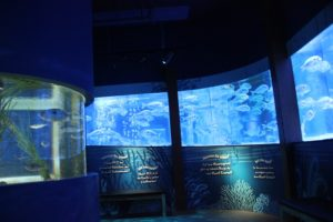 03 Rundum Aquarium Sea Life Berlin