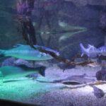 07 Fischaquarium Sea Life Berlin