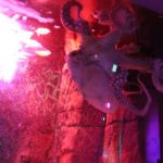 10 Krake Sea Life Berlin