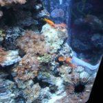 15 Seeigel Sea Life Berlin