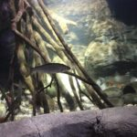17 Fisch im Aquarium Sea Life Berlin