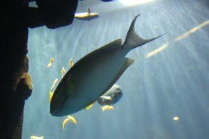 23 Fisch im Aquadom