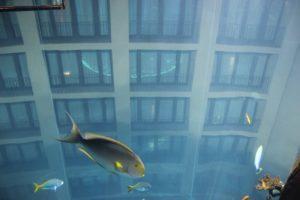 24 Hotelhintergrund Aquadom
