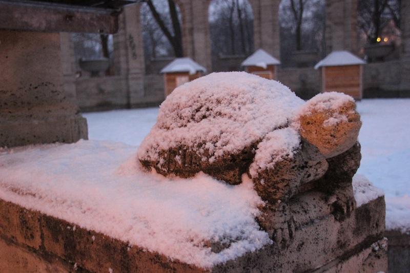 Schildkroete im Schnee