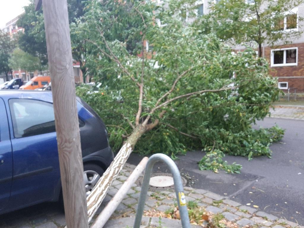 Umgestuerzter Baum Friedrichshain
