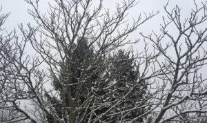 Schnee auf Baeume