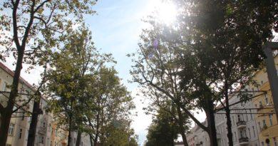 Sonne durch die Baeume