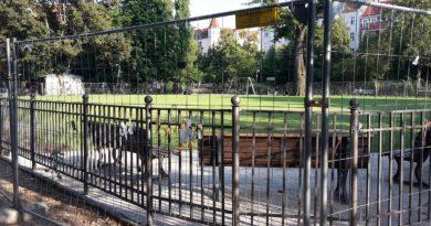 Gruener Rasen auf dem Boxhagener Platz