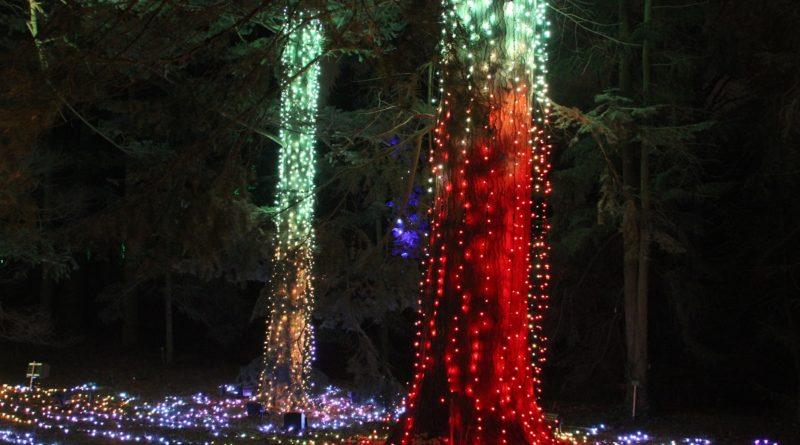 Christmas Garden Berlin Baum stamm