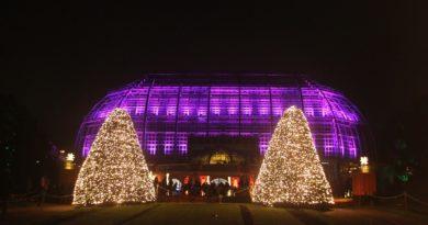 Christmas Garden Berlin Eisbahn