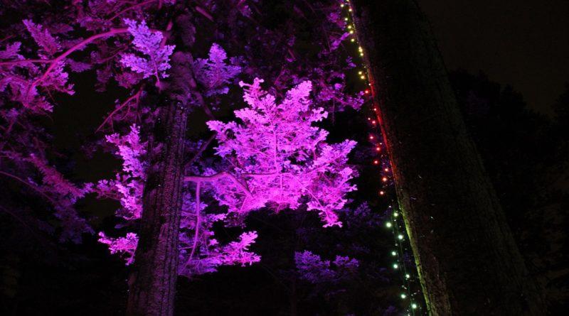Christmas Garden Berlin baum lila