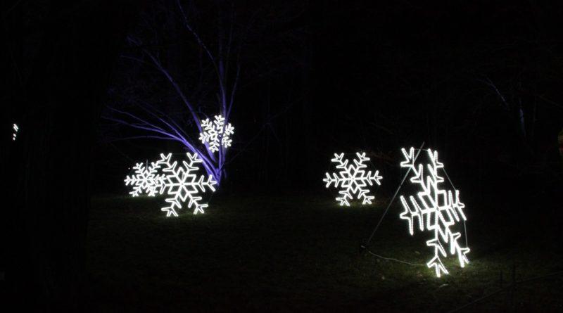 Christmas Garden Berlin sterne im feld