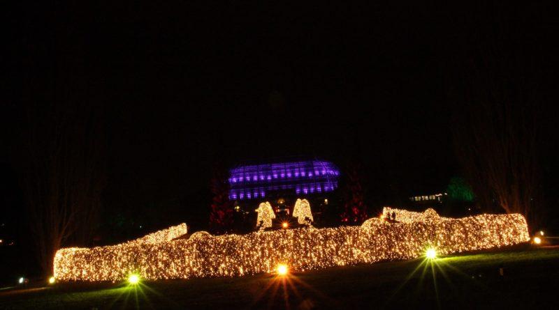 Christmas Garden Berlin weitansicht lila