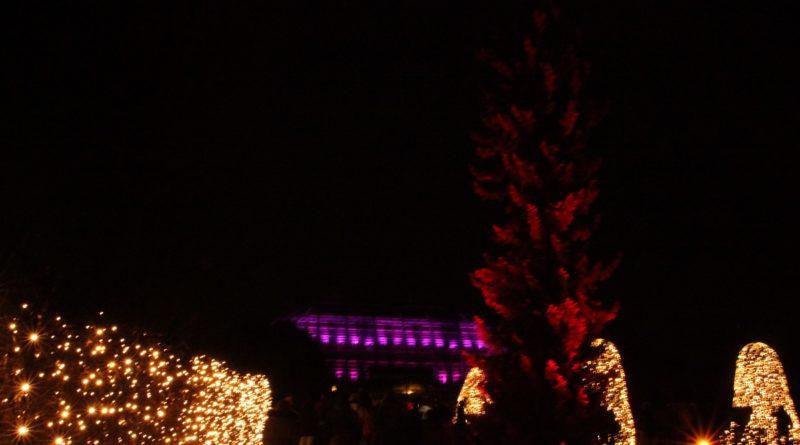 Christmas Garden Berlin Rote bäume und Hecke
