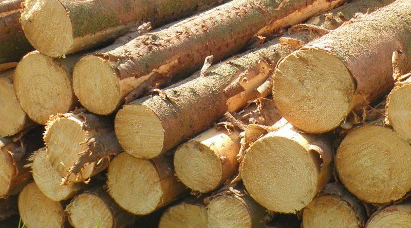 Holzstaemme