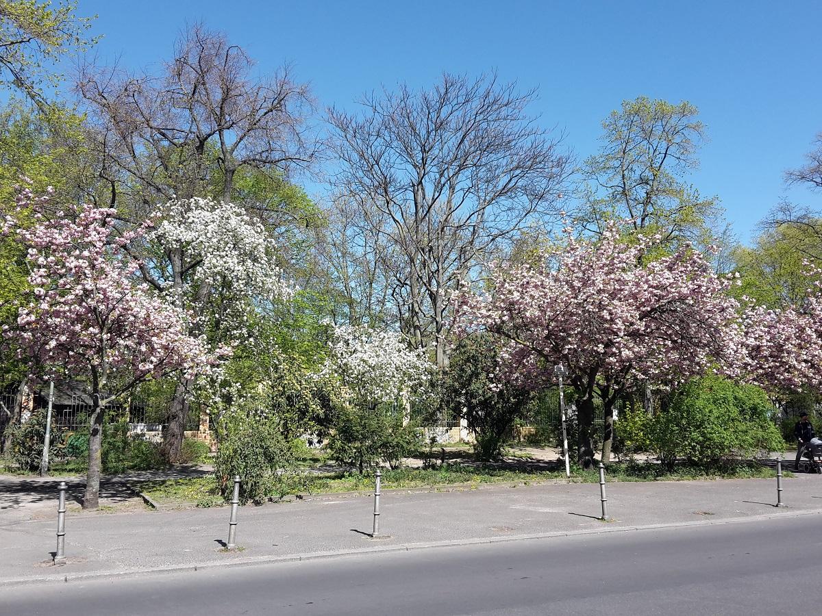 Goerlitzer Park Fruehling