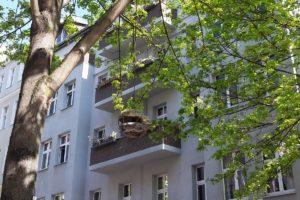 Vogelhaus Cutie Kreuzberg